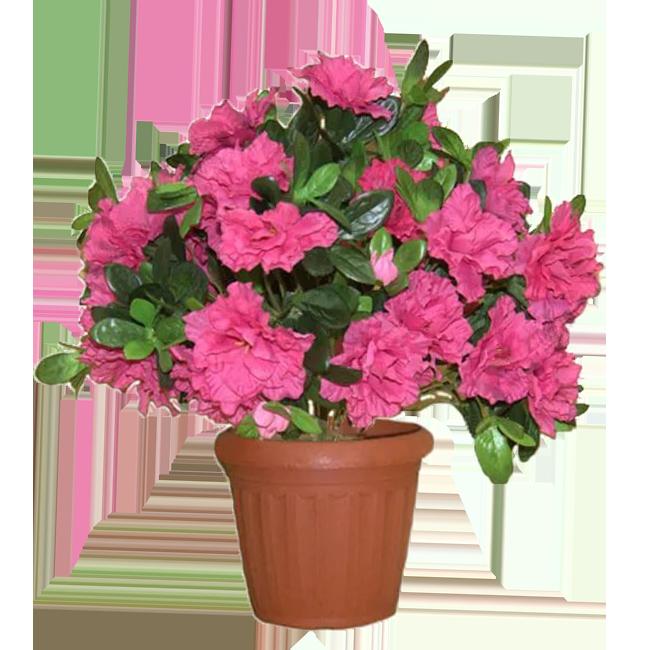 Цветов г.павлодар доставка цветов хабаровск букетов - азалия чебоксары букет розы